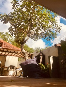 Tree - Fado Villa Prestige
